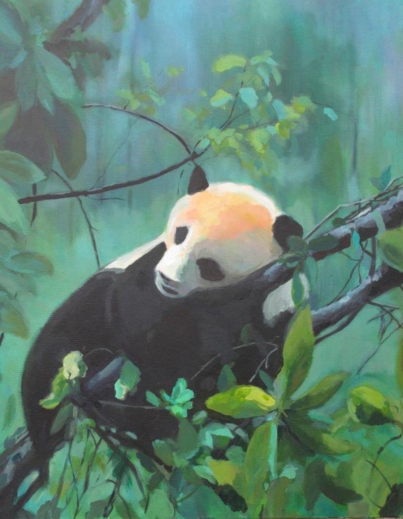 Oso panda -1