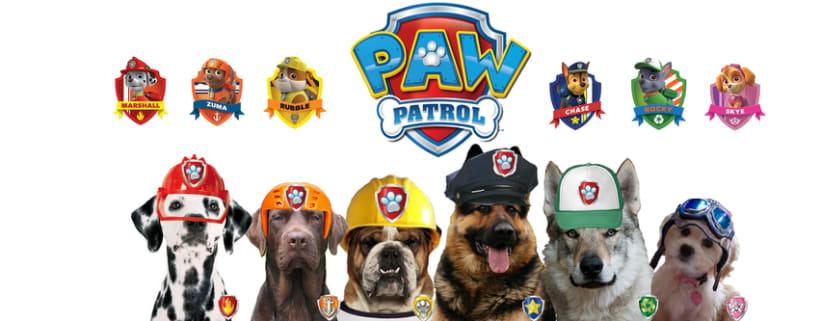 paw patrol -1