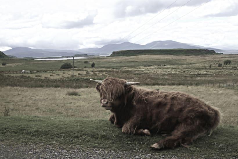 ScottishTrip 4