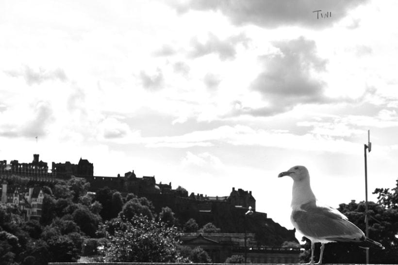 ScottishTrip 11