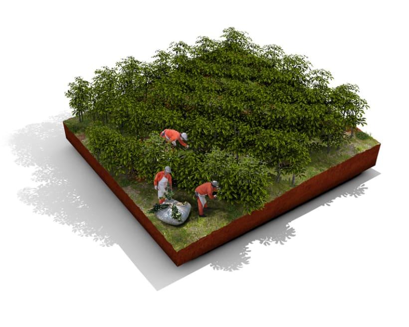 Establecimiento Las Marías (Argentina) - Elaboración de la yerba mate 5