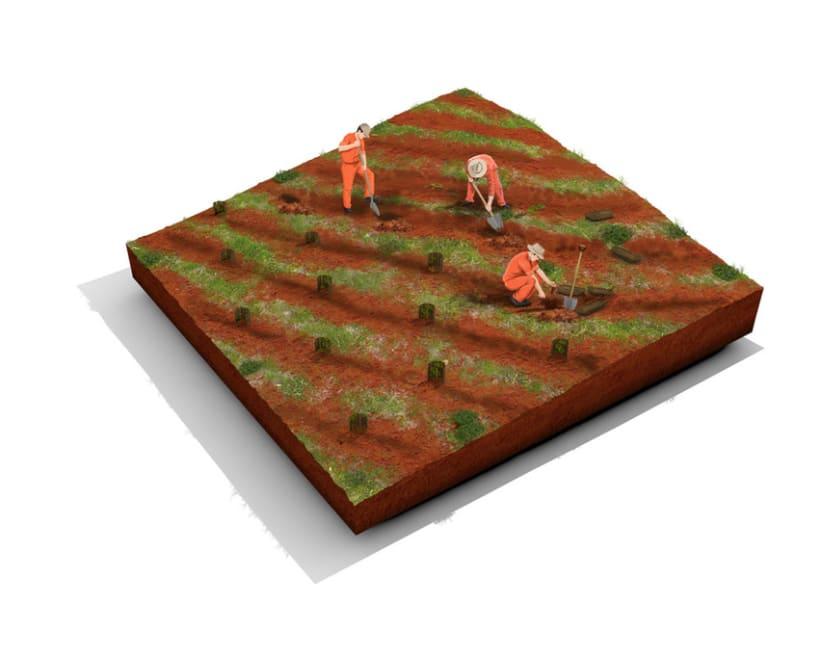 Establecimiento Las Marías (Argentina) - Elaboración de la yerba mate 6