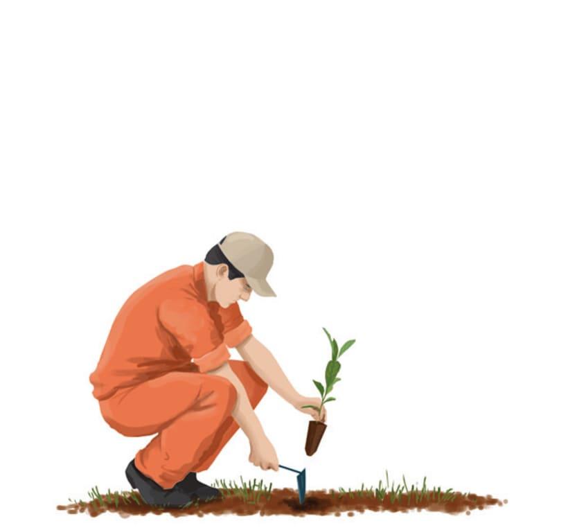 Establecimiento Las Marías (Argentina) - Elaboración de la yerba mate 9