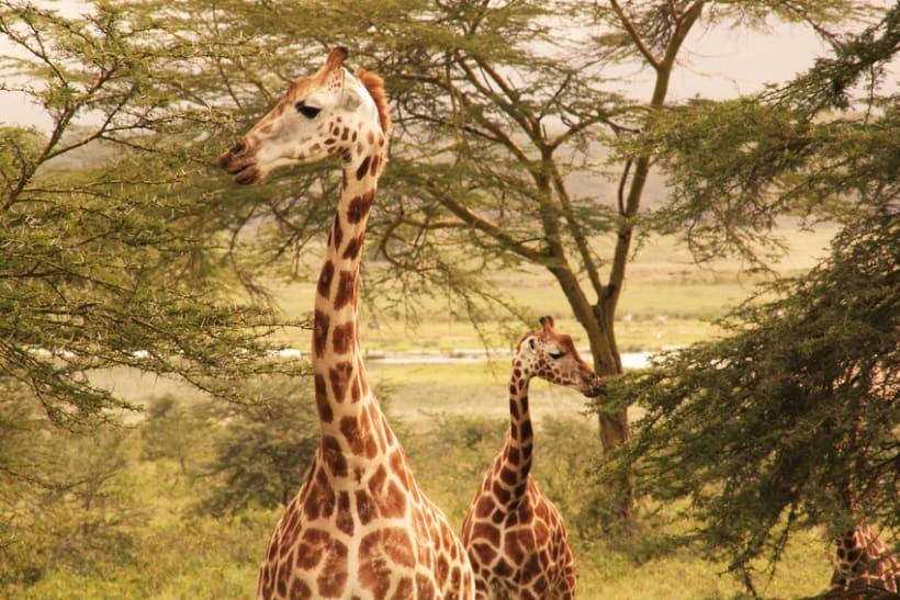 LUGARES DEL MUNDO: KENIA 1