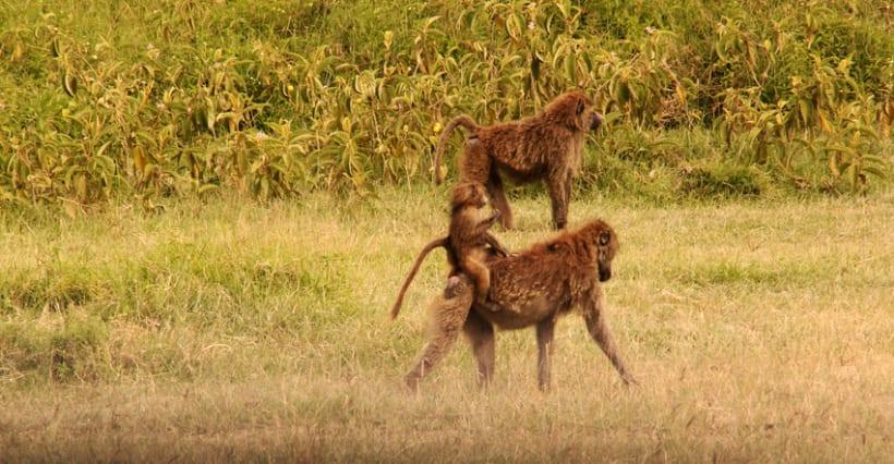 LUGARES DEL MUNDO: KENIA 4