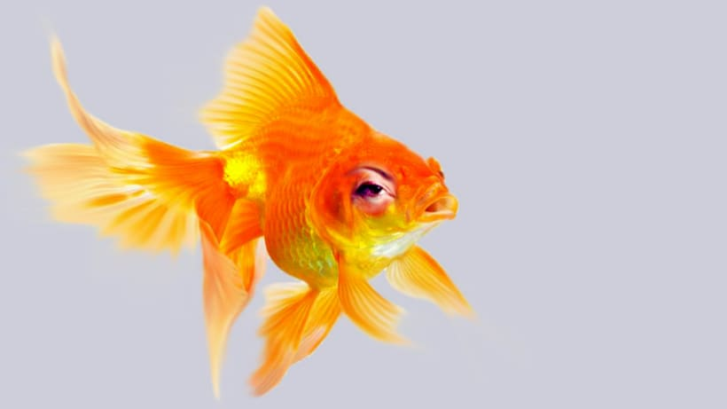 Goldfish Series 0