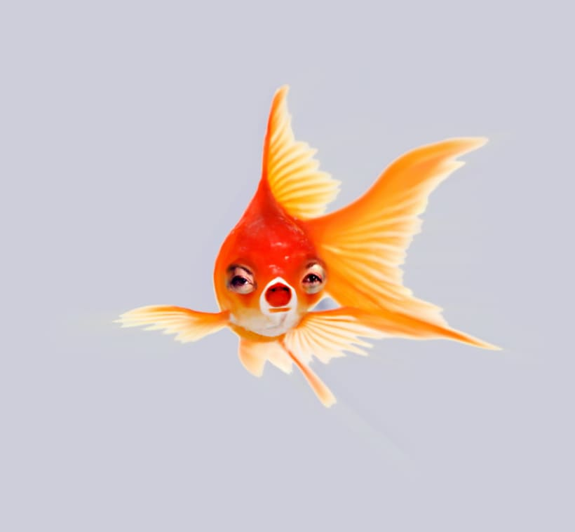 Goldfish Series 1