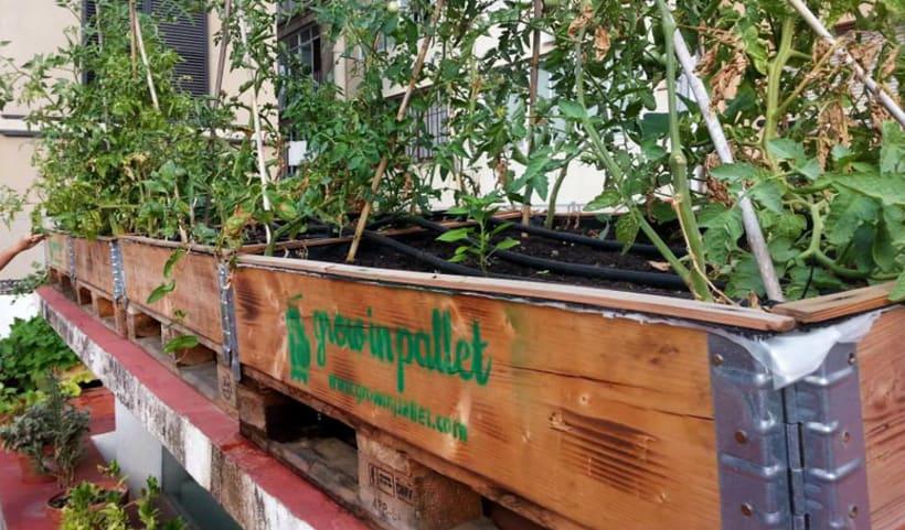 Grow in pallet 2