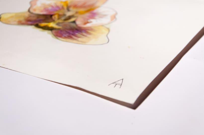 Cabeza de Orquídea 0