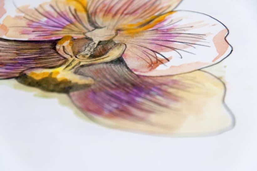 Cabeza de Orquídea 1