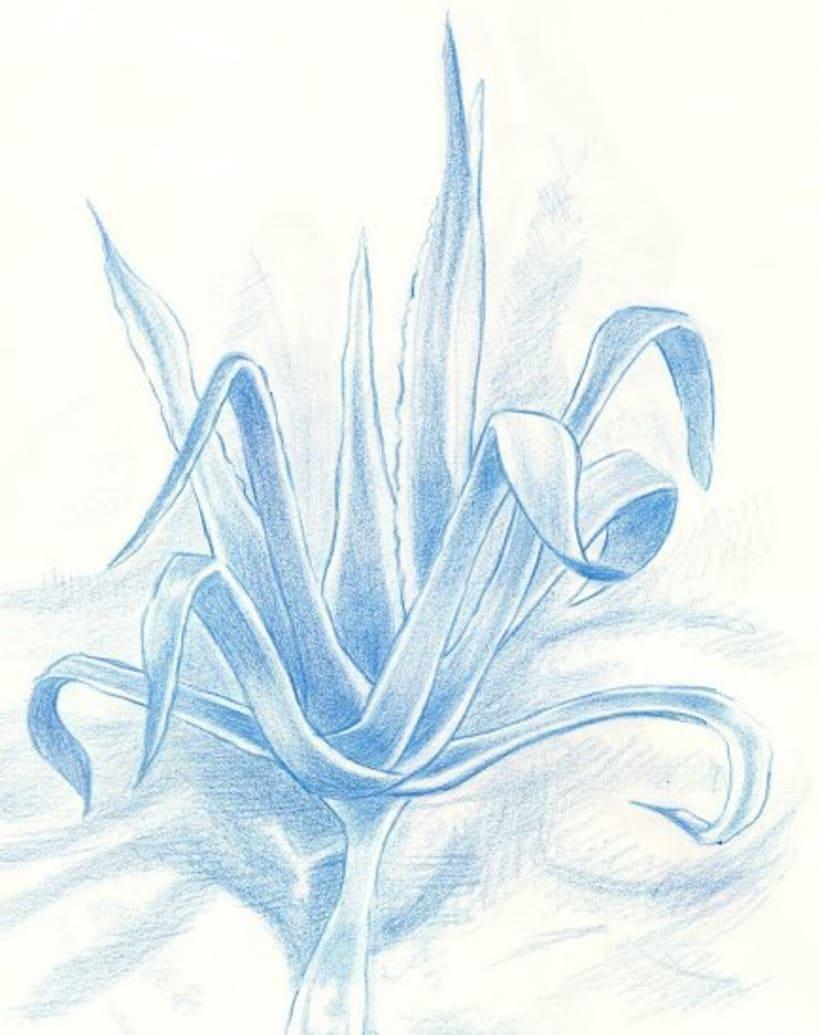 Ilustraciones con técnicas secas (carboncillos, pasteles y lápiz) 0