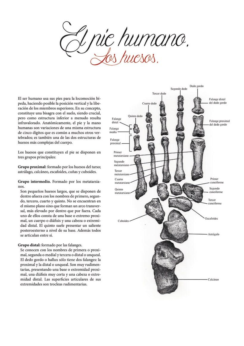 Ilustración científica 1 4