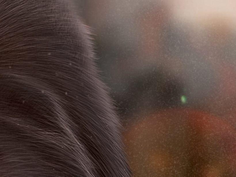 Gorila 6