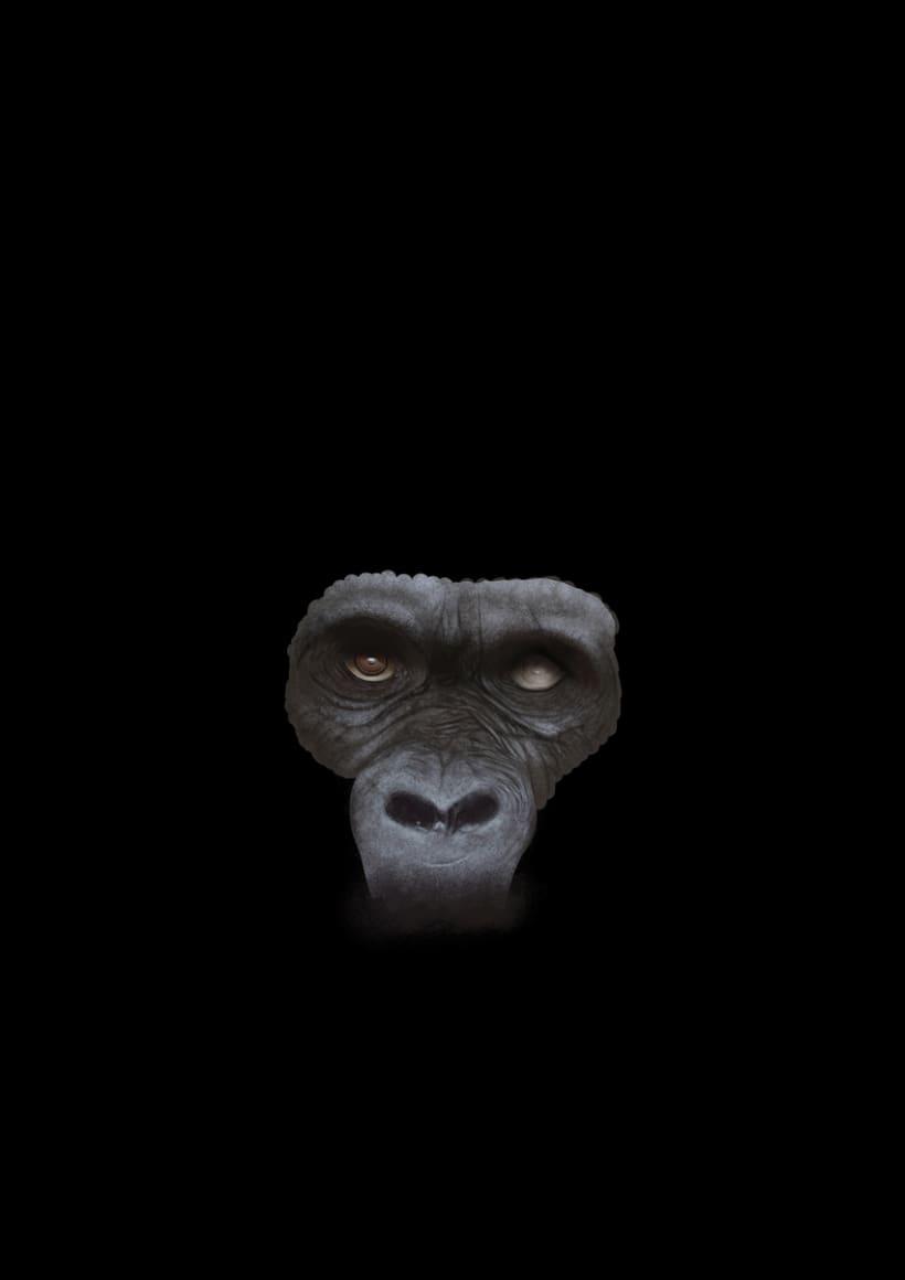 Gorila 10