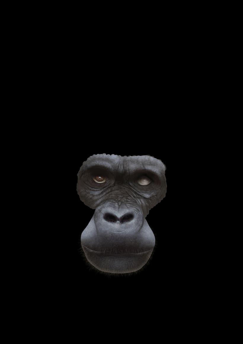 Gorila 12