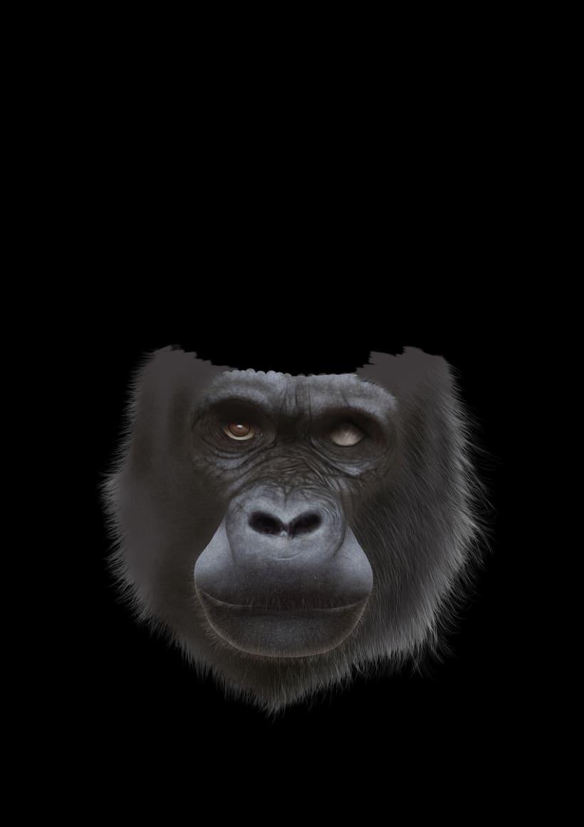 Gorila 13