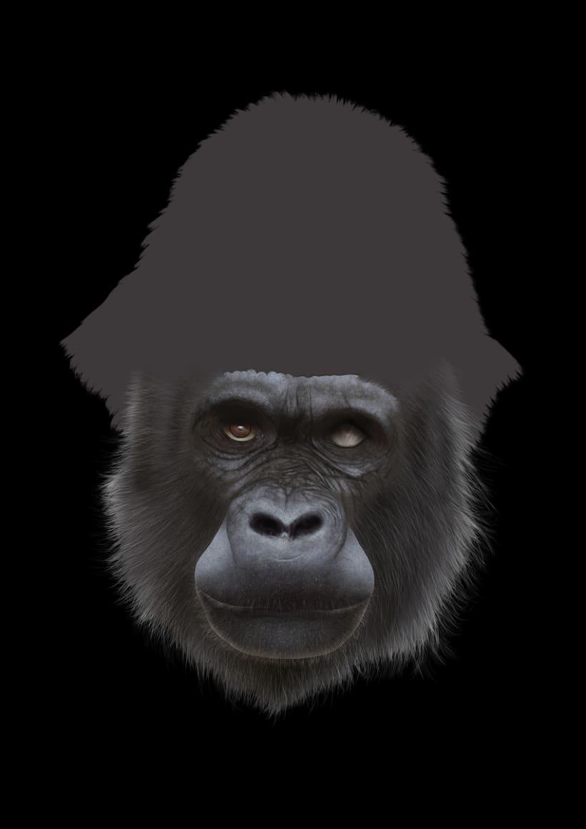 Gorila 14
