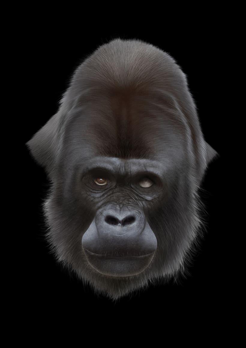 Gorila 15