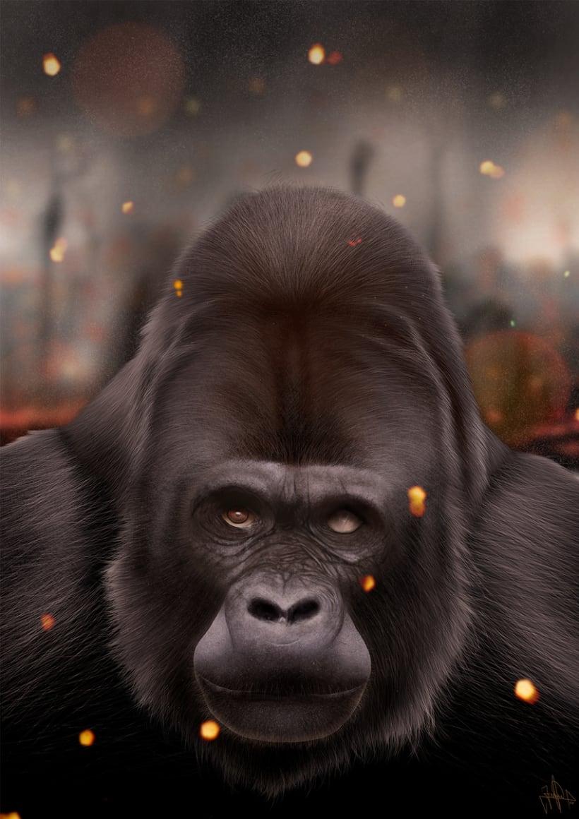 Gorila 16