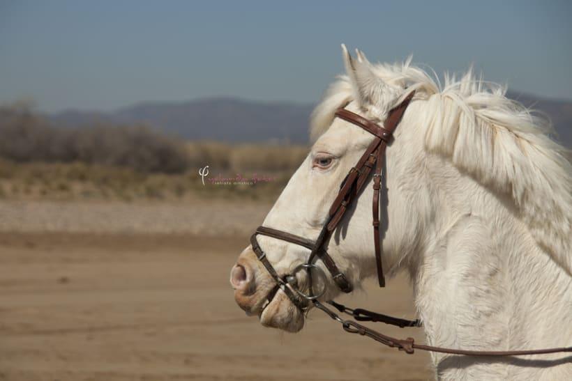 Reportaje - en caballo por la playa 8