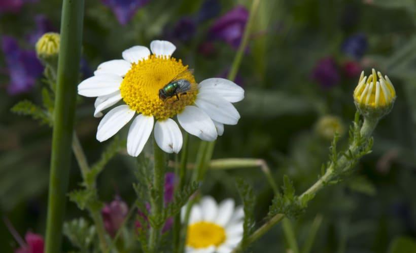 Flora y Fauna 8