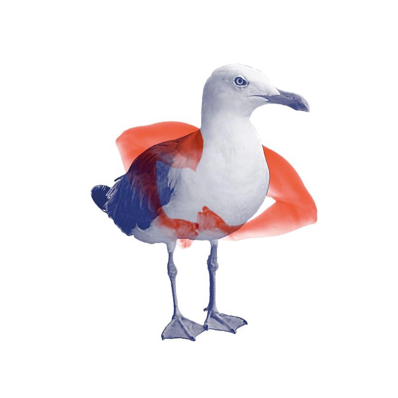 Aves de Gimnasio 1