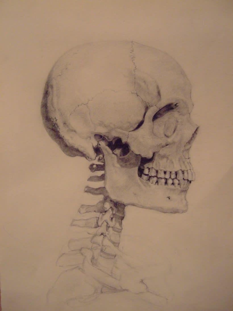 Universidad Complutense de Madrid, aula de anatomía. Reconstrucción anatómica de la cabeza humana 0