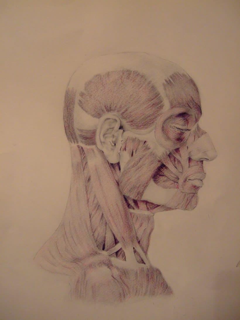 Universidad Complutense de Madrid, aula de anatomía. Reconstrucción anatómica de la cabeza humana 2