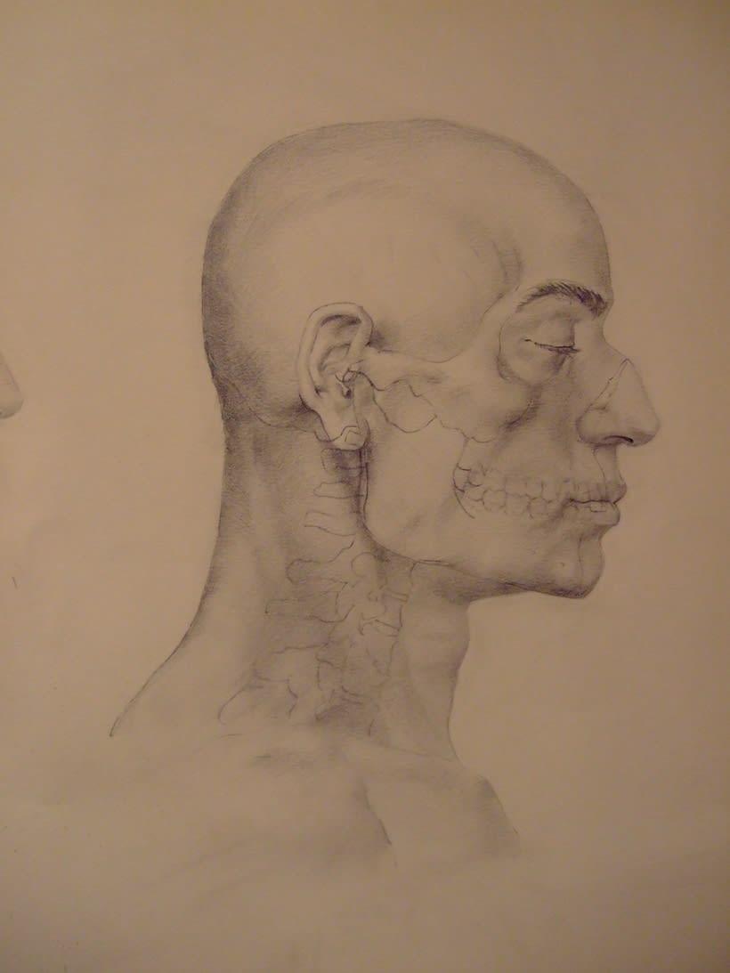 Universidad Complutense de Madrid, aula de anatomía. Reconstrucción anatómica de la cabeza humana 3