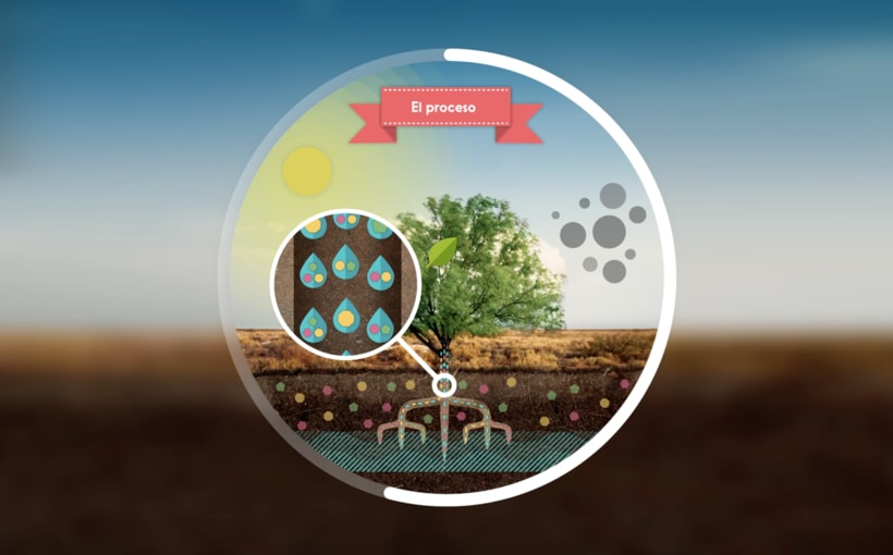 Photosynthesis - Animated infographics 1