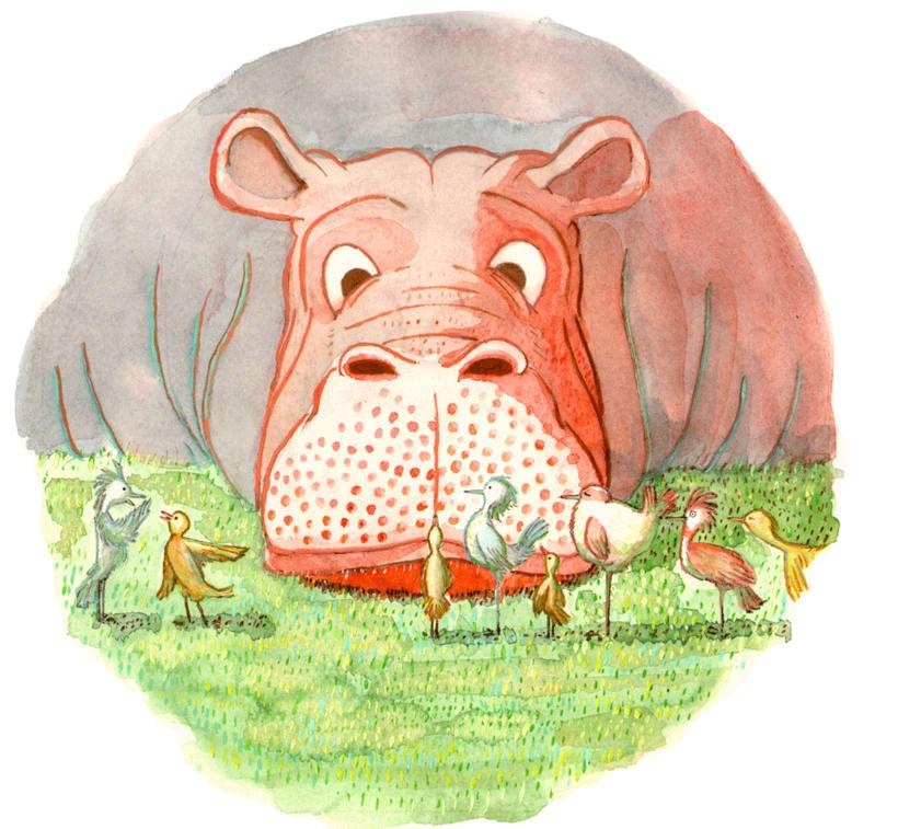 Hipopótamos 0