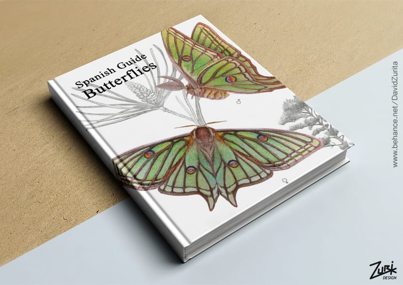 Ilustracion científica de la mariposa: Graellsia isabelae. 4