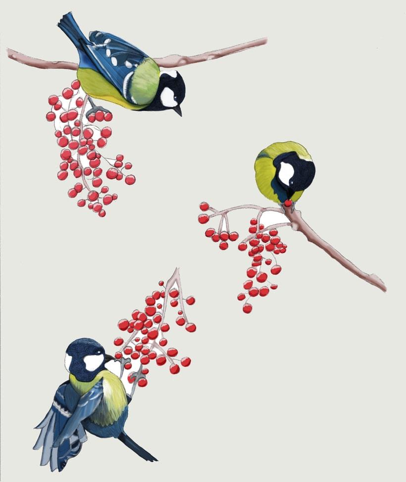 Pájaros. Ilustración técnica mixta 0
