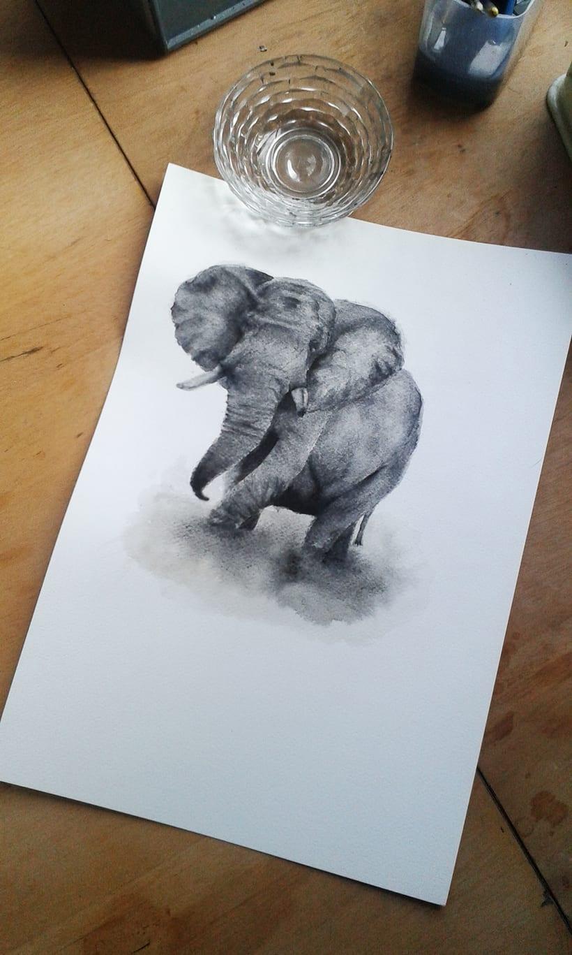 Elefante Acuarela. 0