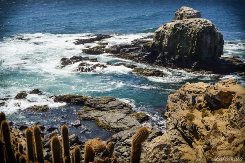 Rocas y Cactus 1