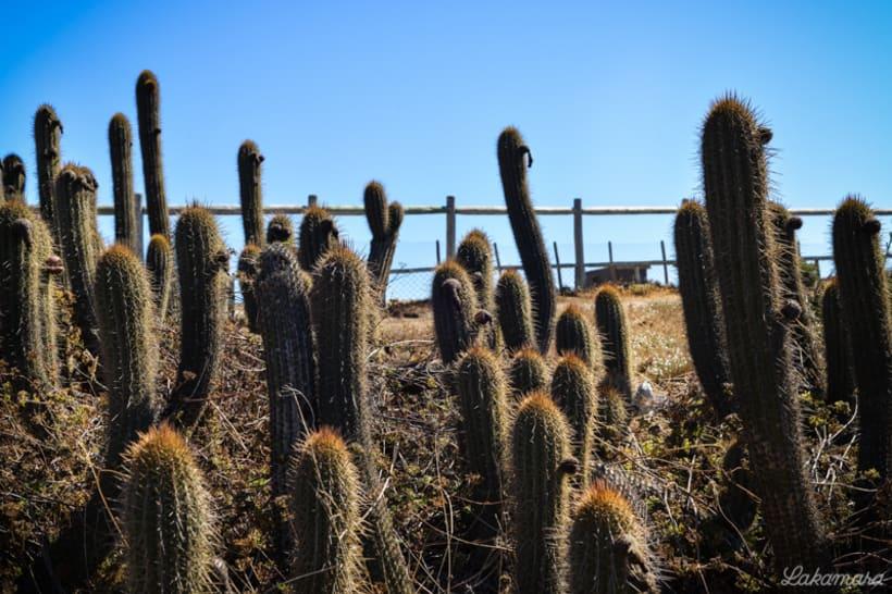 Rocas y Cactus 6