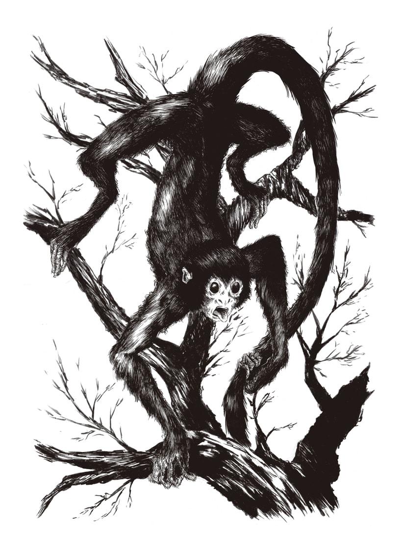 Mono araña | Domestika