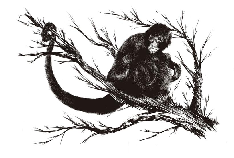 Mono araña 1