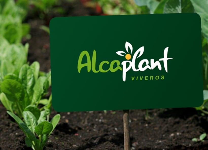 Alcaplant es un vivero ubicado en la provincia de Castellón y especializado en el cultivo y cuidado de cítricos: naranjos, limoneros, etc... -1