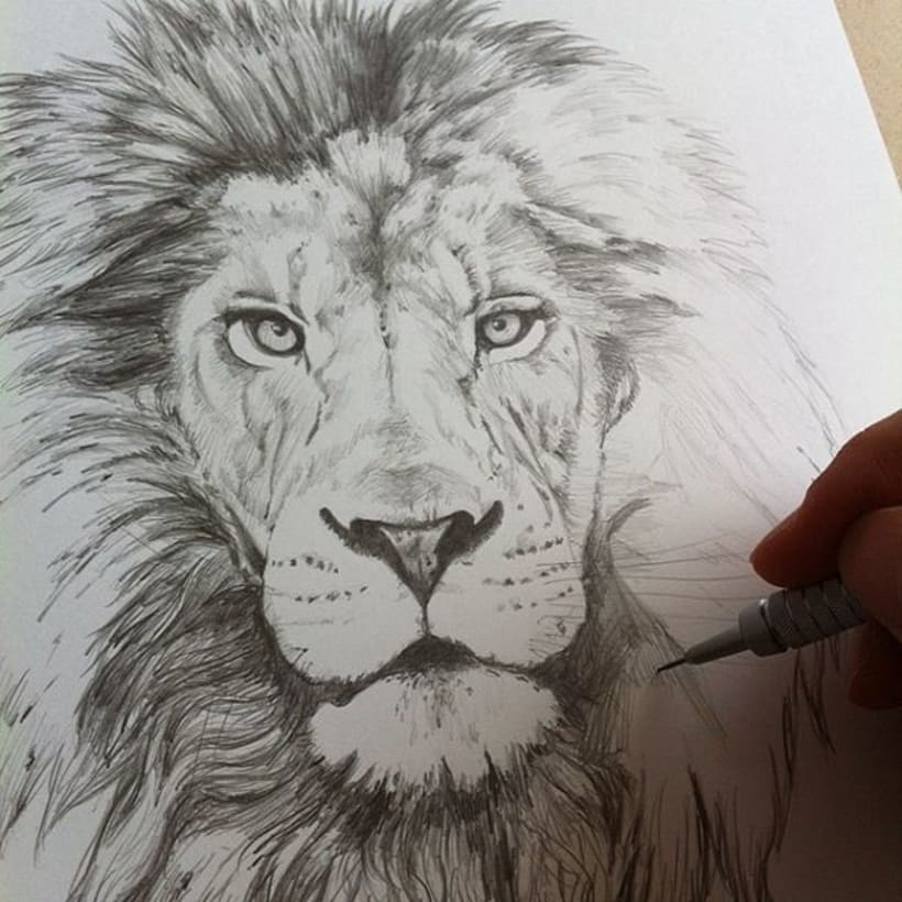Lion, The King 1