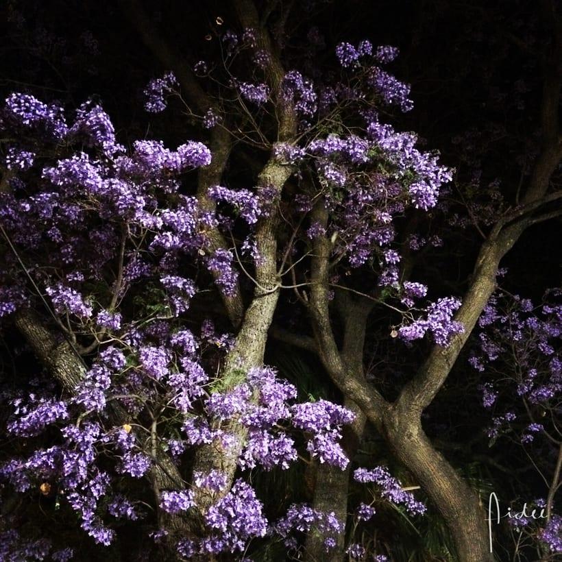 FOTOGRAFÍA: Me gusta capturar momentos, colores y la naturaleza.  0