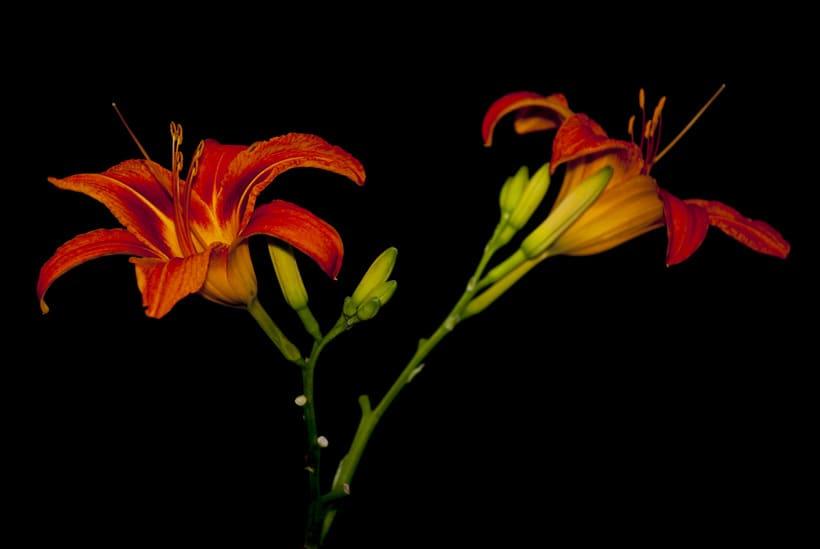 Flora y Fauna 10