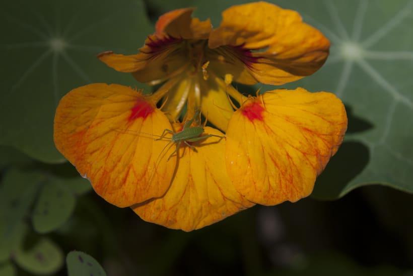 Flora y Fauna 11