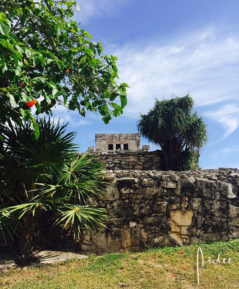 FOTOGRAFÍA 2 COLORES DE MÉXICO 2