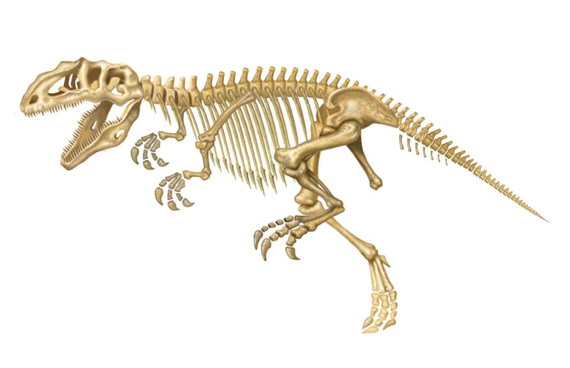 Giganotosaurus carolini 5