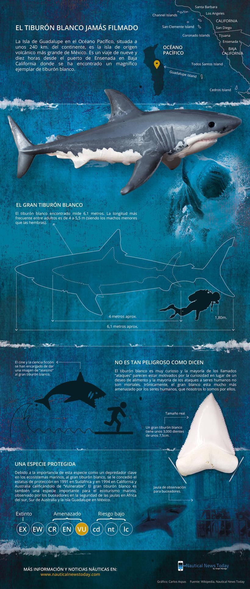 El tiburón blanco jamás filmado -1