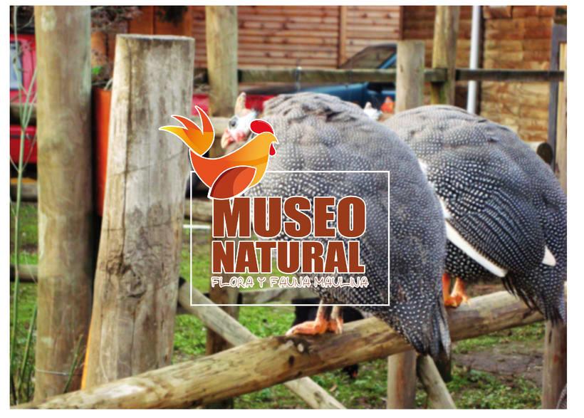 Desarrollo de Identidad Corporativa - Museo Natural  3