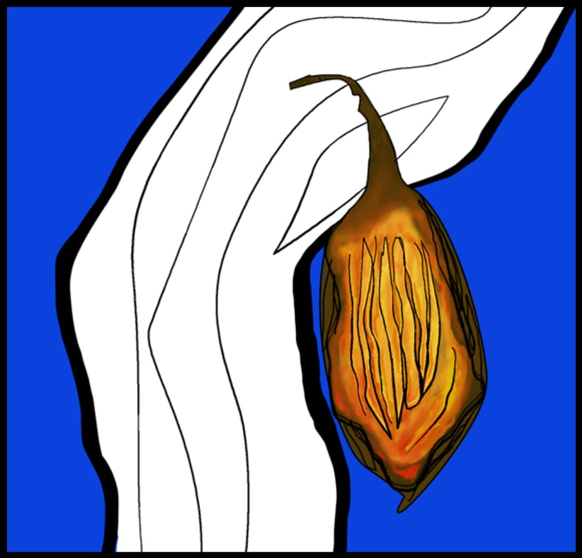 Cacao /// #Ilustración #Artwork 1