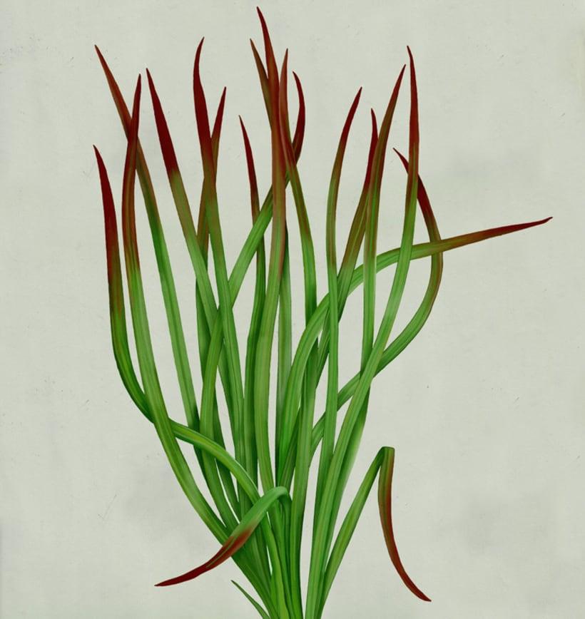 Botanical 0