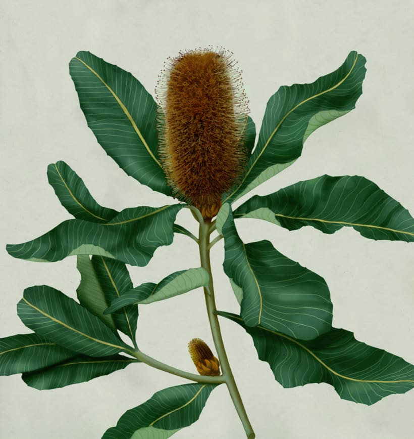 Botanical 4